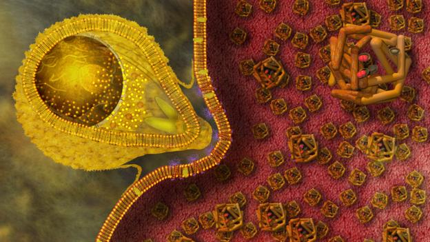 malaria-origins