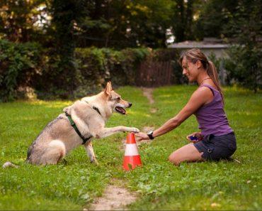 dog-training-body-language